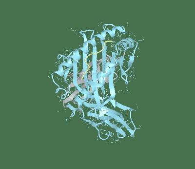 HLA–A*02:07