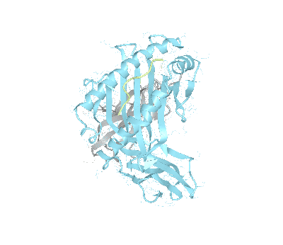 HLA–A*69:01bio